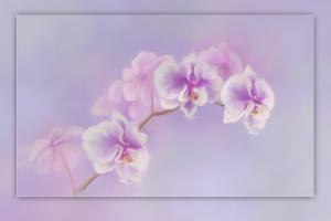 Orchids Painted