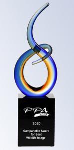 Campanellie Award for Best Wildlife Image